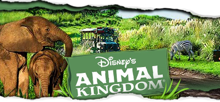 Disney S Animal Kingdom Hotel Review By Jeff Voth Road