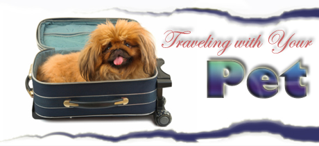 Pet Travel Advice & Tips